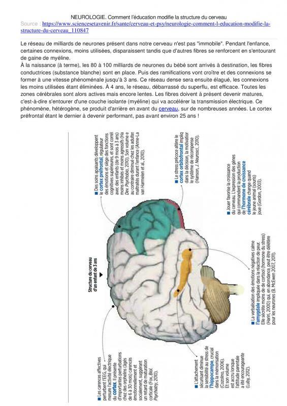 Comment l educ modifie la structure du cerveau 1