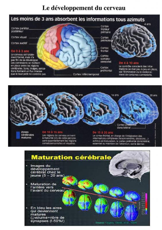 Devlpt cerveau 0 a 20 ans