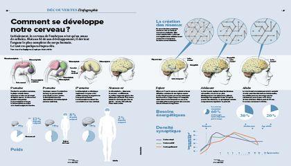 Devlpt cerveau 1